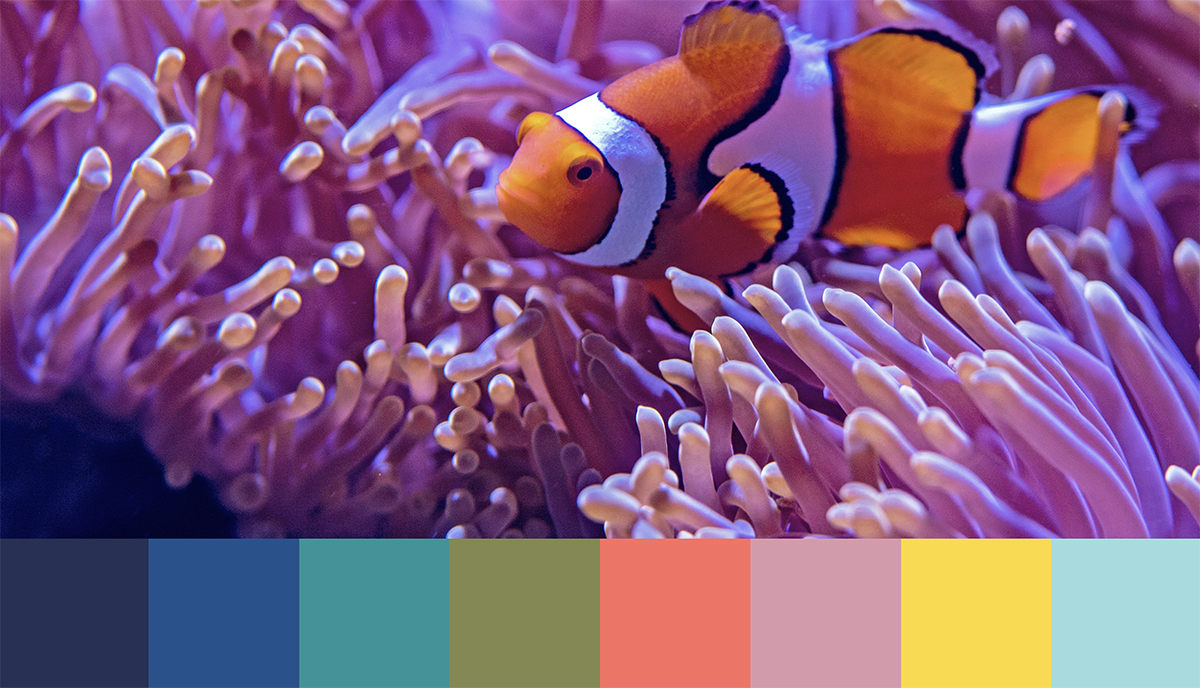 Palette Under The Sea